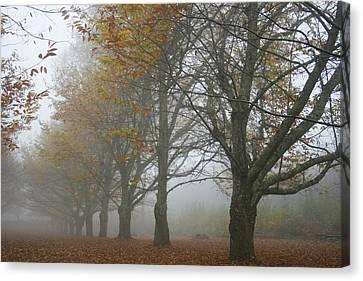 Misty November Canvas Print by Georgia Fowler