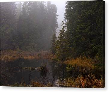 Misty Solitude Canvas Print by Mike Reid
