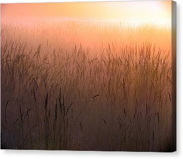 Canvas Print featuring the photograph Misty Sunrise by I'ina Van Lawick