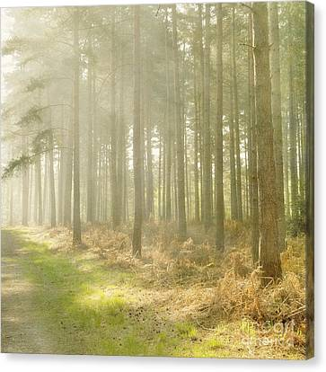 Misty Sunrise Canvas Print by Paul Grand
