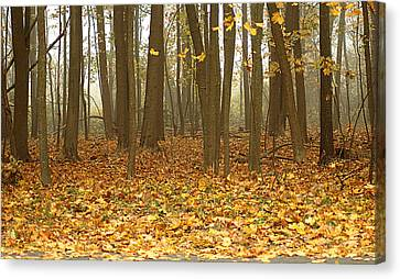 Misty Wood Canvas Print by Cathy Kovarik