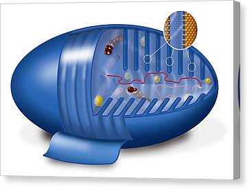 Mitochondrion, Artwork Canvas Print by Art For Science