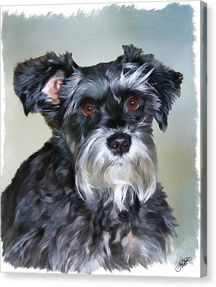 Standard Schnauzer Canvas Print - Mitzi by Tom Schmidt