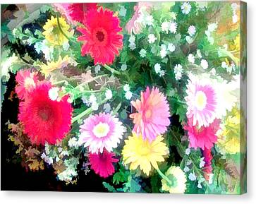Mixed Asters Canvas Print by Elaine Plesser