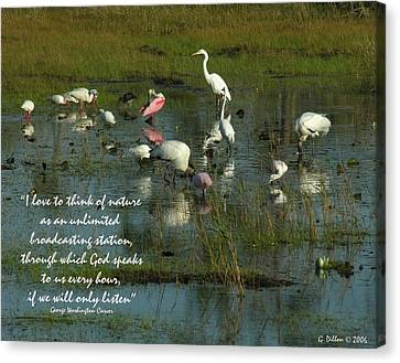 Mixed Flock In Oasis Canvas Print by Grace Dillon