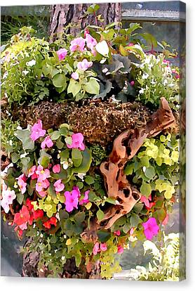 Mixed Impatiens In Driftwood Hanging Basket Canvas Print