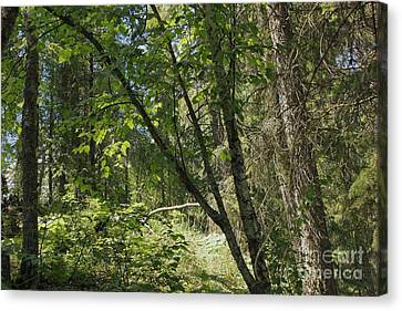 Mixed Woods Canvas Print