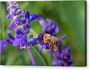 Canvas Print featuring the photograph Mmmm Honey by Tom Gort