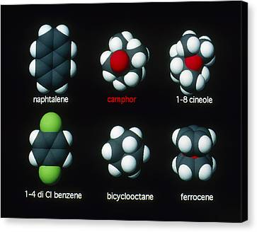 Molecules That Smell Like Camphor Canvas Print by David Parker