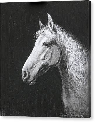 Mollie Canvas Print by Tomas OMaoldomhnaigh