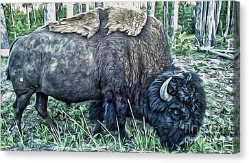 Molting Bison In Yellowstone Canvas Print by Gregory Dyer