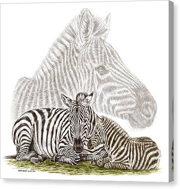 Canvas Print featuring the drawing Mom And Baby Zebra Art by Kelli Swan