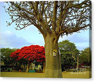 Moments And Tree Canvas Print by Fania Simon