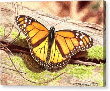 Monarch 2 Canvas Print by Denise Howard