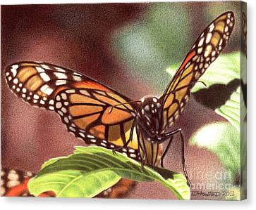 Monarch 5 Canvas Print by Denise Howard