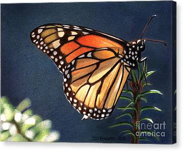 Monarch 6 Canvas Print by Denise Howard