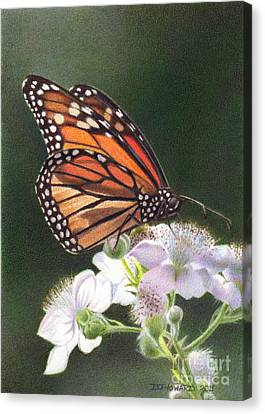 Monarch 7 Canvas Print by Denise Howard