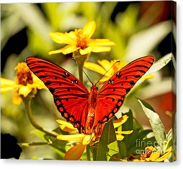 Canvas Print featuring the photograph Monarch Butterfly  by Luana K Perez
