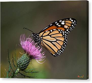 Canvas Print featuring the photograph Monarch Butterfly On Thistle 13a by Gerry Gantt