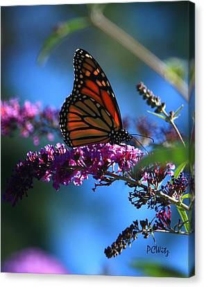 Canvas Print featuring the photograph Monarch Butterfly by Patrick Witz