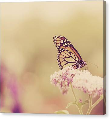 Monarch Butterfly With Bokeh Canvas Print by Kristy Campbell