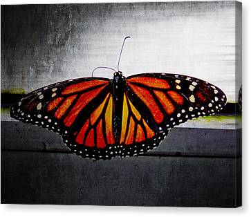 Canvas Print featuring the photograph Monarch by Julia Wilcox