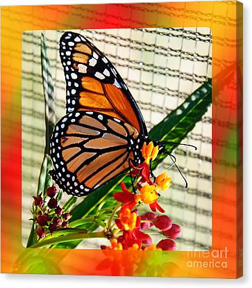 Monarch Rainbow Canvas Print by Andee Design