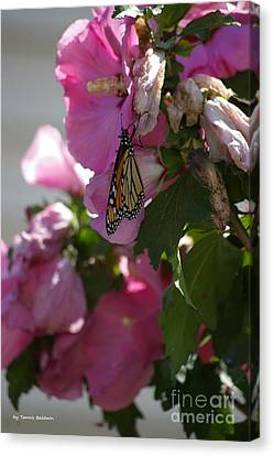 Canvas Print featuring the photograph Monarch by Tannis  Baldwin