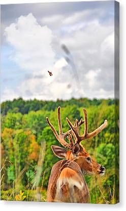 Monarch Velvet Canvas Print