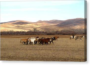 Mongolian Horses Canvas Print by Diane Height