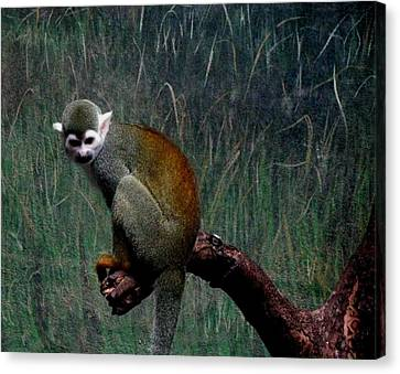 Canvas Print featuring the photograph Monkey by Maria Urso