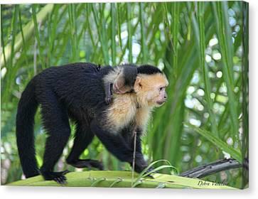Monkey On My Back Canvas Print by Debra     Vatalaro
