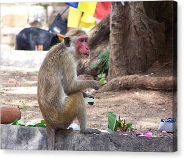 Monkey See Monkey Do Canvas Print by Steve Huang