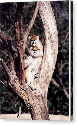 Canvas Print featuring the photograph Monkeys In The Tree by Denise Moore