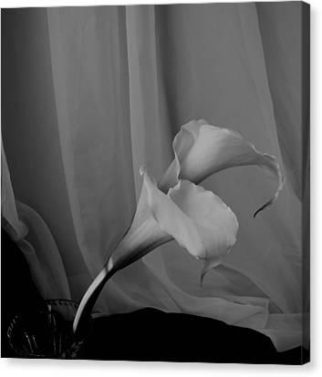 Monochrome Calla Lilies Canvas Print by Lynnette Johns