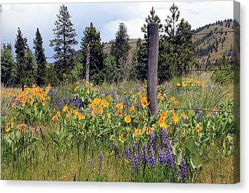 Canvas Print featuring the photograph Montana Wildflowers by Athena Mckinzie