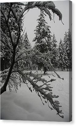 Montana Winter Canvas Print by G Humeston