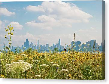 Montrose Harbor's Bird Sanctuary Canvas Print by by Rolour Garcia