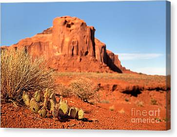 Indigenous Canvas Print - Monument Valley Cactus by Jane Rix