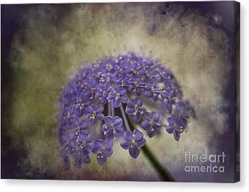 Canvas Print featuring the photograph Moody Blue by Clare Bambers