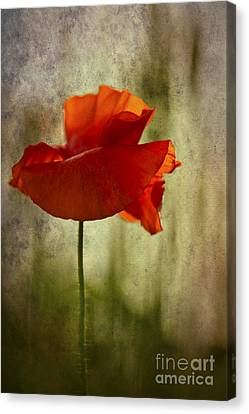 Canvas Print featuring the photograph Moody Poppy. by Clare Bambers - Bambers Images