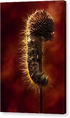 Moody Red Tent Caterpillar Canvas Print by Bill Tiepelman