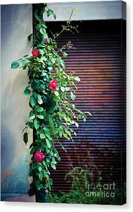 Moody Roses Canvas Print by Silvia Ganora