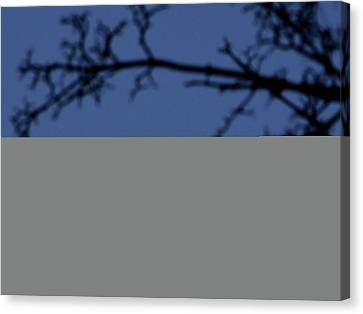 Moon And Branches Canvas Print by Christoph Hetzmannseder