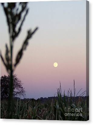 Moon Canvas Print by Andrea Anderegg