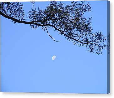 Canvas Print featuring the photograph Moon by Bogdan Floridana Oana