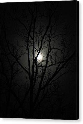 Moon Branches Canvas Print by Jennifer Compton