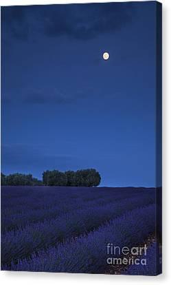 Moon Over Lavender Canvas Print by Brian Jannsen