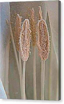Moon Pistils  Canvas Print by Chris Berry