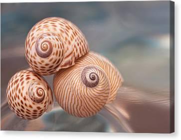 Sanibel Island Canvas Print - Moon Shells by Carol Leigh